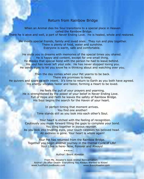 rainbow bridge poem  animals  return return