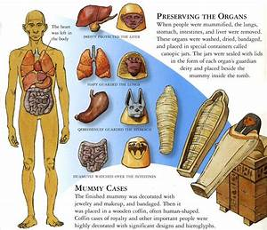 Canopic Jars  Organ Systems  And Their Respective Patron
