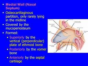 Nose, Nasal cavity & Paranasal Sinuses - ppt video online ...