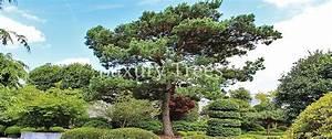 Johannisbeeren Hochstamm Kaufen : gartenb ume luxurytrees schweiz ~ Lizthompson.info Haus und Dekorationen