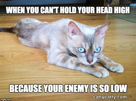 Unhappy Cat Meme - greedy cat or lying kitten you decide catty catty