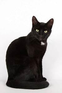 U1408 Gato Negro Im U00e1genes De Stock  Fotos Gato
