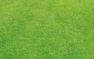 Quand Semer Du Gazon : pourquoi installer du gazon synth tique dans son jardin ~ Dailycaller-alerts.com Idées de Décoration