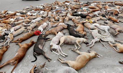 stray dogs murdered  russian world cup cities mps