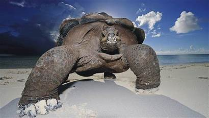Turtle Definition Wallpapers