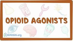 Agonist Definition Anatomy