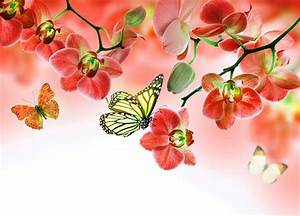 Schöne Orchideen Bilder : bilder von monarchfalter schmetterlinge orchideen blumen 5000x3600 ~ Orissabook.com Haus und Dekorationen