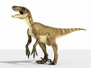 Velociraptor | Extinct Animals  Velociraptor