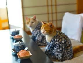 japanese cats these cats can be my japanese tour guides any time catster