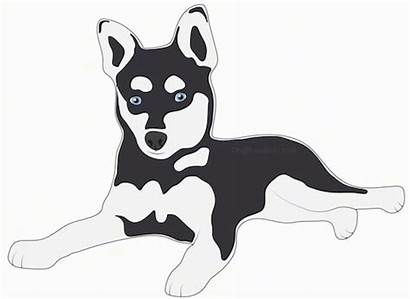 Dog Klee Kai Alaskan Dogs Mix Laying