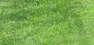 Rasenpflege Im Sommer : gartentipps rasenpflege im sommer pflanzk bel blog von ae trade ~ Frokenaadalensverden.com Haus und Dekorationen
