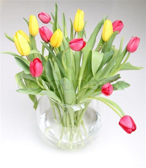 vase für tulpen gelben und roten tulpen in einem glas runde vase stockfoto colourbox