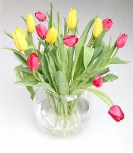 Tulpen In Vase : gelben und roten tulpen in einem glas runde vase stockfoto colourbox ~ Orissabook.com Haus und Dekorationen