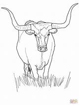 Coloring Longhorn Bull Pages Texas Cattle Cow Drawing Outline Supercoloring Head Printable Ferdinand Line Face Austin Visit Animals Template Tips sketch template