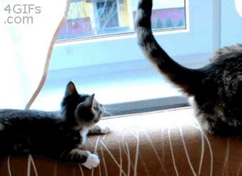 kitten  cat funny cat gifs popsugar tech photo