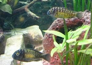 Fische Für Anfänger : anf nger was sind das f r fische aquarium forum ~ Orissabook.com Haus und Dekorationen