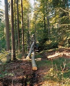 Baum Fällen Technik : r ckung gef llter b ume ber r ckegasse nur auf diesen ~ A.2002-acura-tl-radio.info Haus und Dekorationen