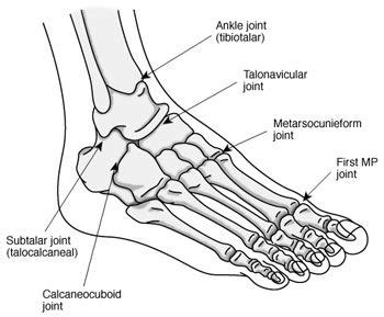 Simple Bone Diagram by Ankle Bones Diagram Ankle Bones Diagram Closets Foot