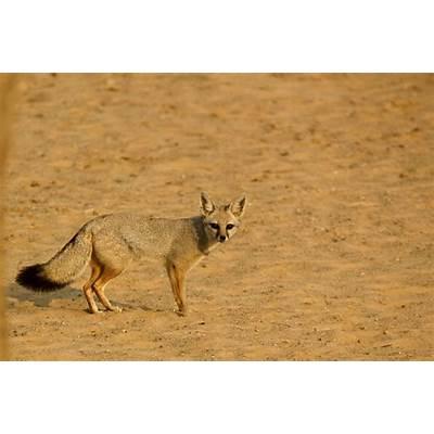 FROM THE LAND OF SAND DUNES -- Desert National Park