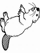 Beaver Coloring Pages Animal Printable Animals sketch template