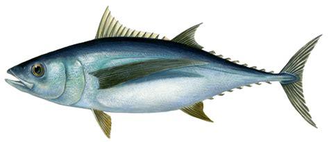 comment cuisiner de la sole thon marine stewardship council