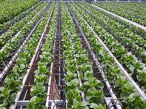 Increasing Crop Production By Using Drip Irrigation System ...