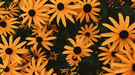 Aesthetic Chromebook Backgrounds by 3840x2160 Wallpaper Coneflowers Flowers Flowerbed Many
