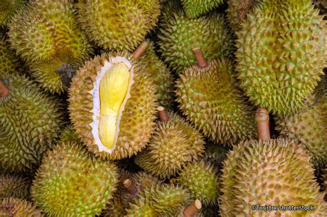 Where The Wild Things Are Fruit Boat by 5 Strange Looking But Great Thai Fruits Tropical Fruits