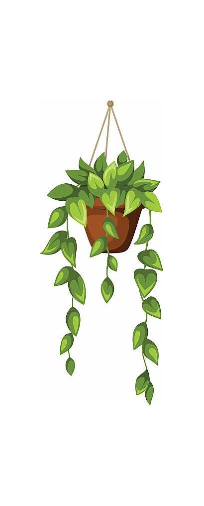 Planter Hanging Clipart Vector Clip Pot Illustrations