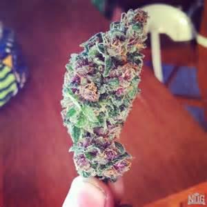 Blunts Weed Marijuana