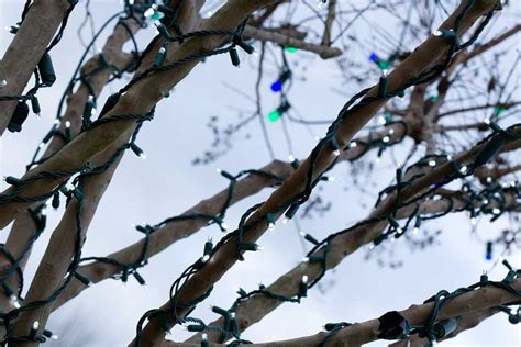 howto wrap christmas lights around tree branches wrapping trees with lights
