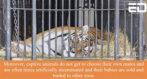 zoos harsh reality animals depression suffering read these