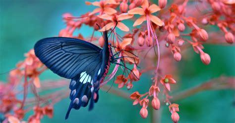 Beautiful Butterfly And Flower 4k Ultra Hd Wallpaper