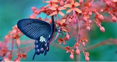 Butterfly Flowers Gambar 4k Flower Kupu Wallpapers