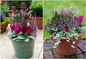 Kübel Bepflanzen Ideen : beliebte herbstblumen f r balkon 11 balkonbepflanzung ideen ~ Buech-reservation.com Haus und Dekorationen