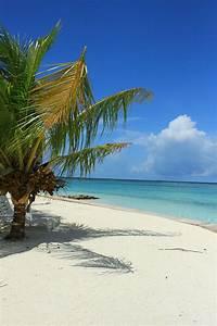 Bilder Meer Strand : strand meer palme kostenloses foto auf pixabay ~ Eleganceandgraceweddings.com Haus und Dekorationen