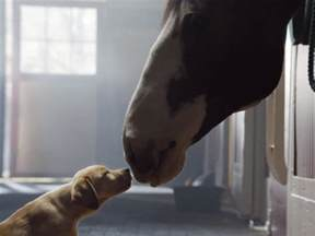 Puppy Super Bowl Budweiser Clydesdale Commercial
