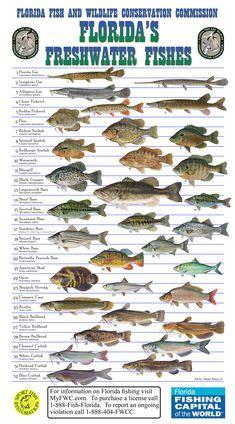aquaponics uk trout  ponic