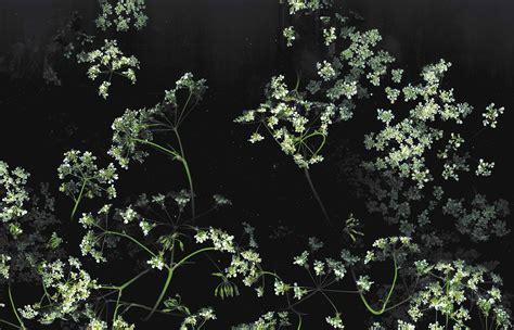 wallpaper floral flowers macro 1920x1234
