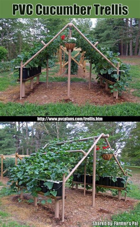 pvc trellis garden ideas trellis