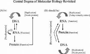 The Central Dogma Of Molecular Biology Revisited  The Central Dogma Of