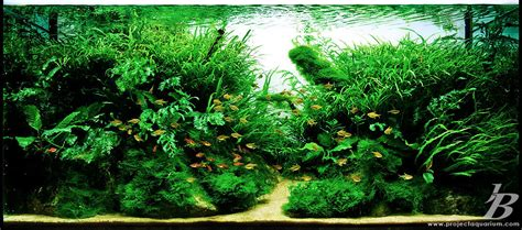 Aquascape Aquarium Plants by Pics Collection Of Truly Inspired Aquascape Kinds Of