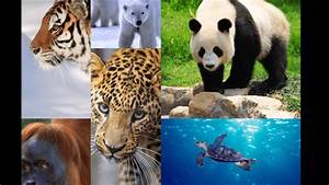 Image Gallery most endangered animals 2016