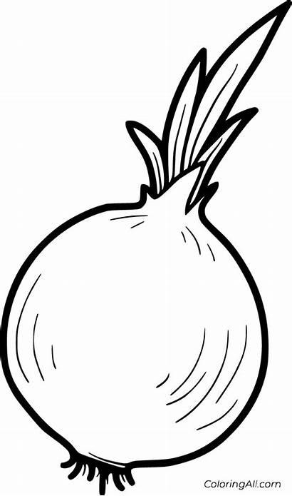 Onion Coloring Cebula Warzywa Owoce Vegetable Colorear