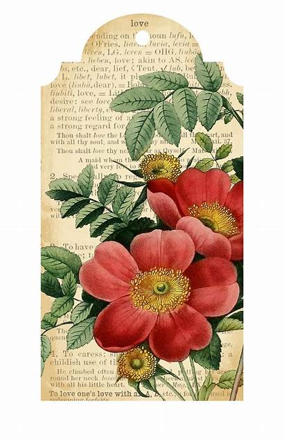 Printable Flower Tags Printables Valentine Victorian Imprimir