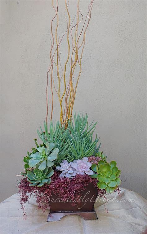 succulent arrangement copper tinted tin box urban succulents