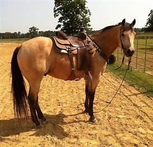 Buckskin gelding ranch/heel horse Reminds me of first ...