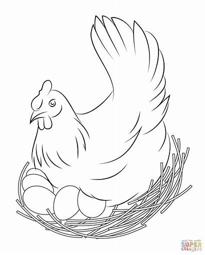 Chicken Coloring Pages Printable Bird Colouring Drawing