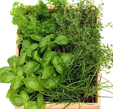herbs plants pictures grow your own monty don says there s never been a better thyme to plant herbs daily mail online