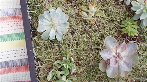 build  succulent wall planter martha stewart